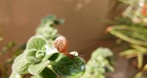 【Xshot眼里的微距】一只蜗牛的精彩世界