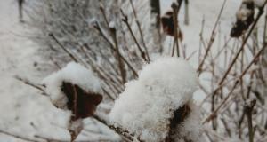 大家来感受一下雪(by vivo Xshot)