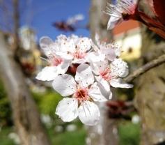 家门口的春天