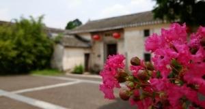 #vivo享智拍#深圳版画村、植物园