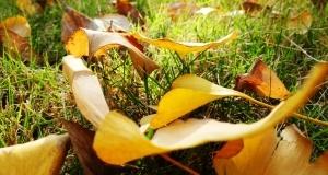 [Xshot 眼中的世界]秋叶静美,岁月安好