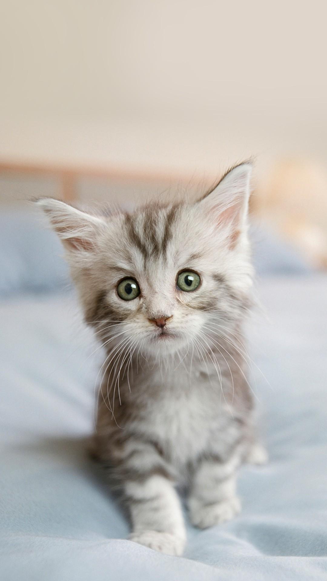 【手机壁纸分享】萌萌的小猫咪